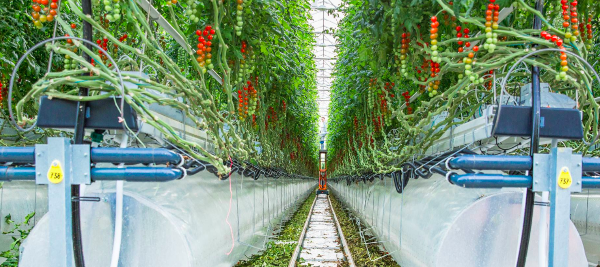 pure-harvest-smart-farms-secures-60-million-in-growth-funding-to-support-regional-expansion